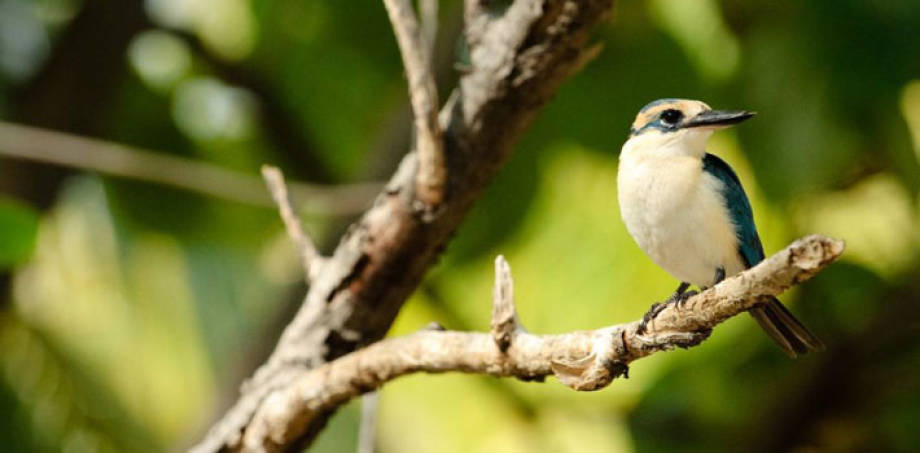 Bringing a Bird Back From the Brink
