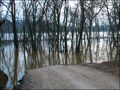 Flooded Trees
