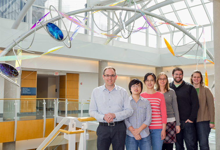 The research team at the Bond Life Sciences Center (left to right): Michael Petris, Sha Zhu, Yanfang Wang, Victoria Hodgkinson, Erik Ladomersky and Karen Nickelson. Photo by Aaron Duke.