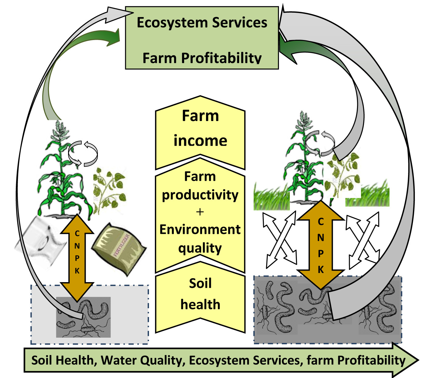 College of agriculture food and natural resources in for Soil resources wikipedia