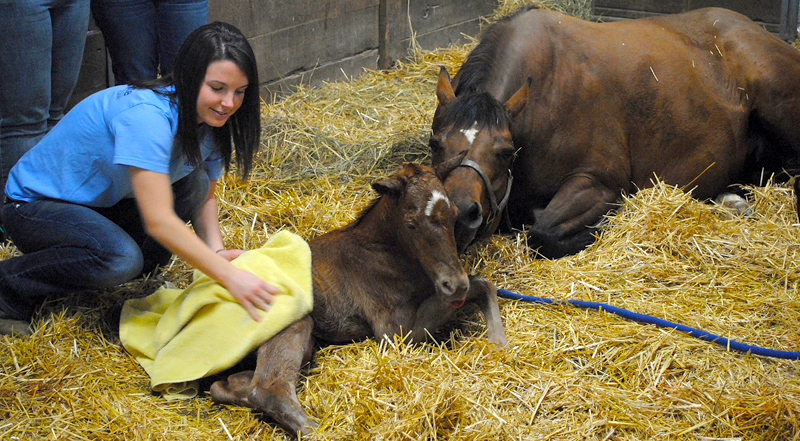 Hannah Buzan, 2013 graduate of MU's animal sciences program, has accepted a prestigious yearlong equine breeding internship at Colorado State University. Courtesy Marci Crosby.
