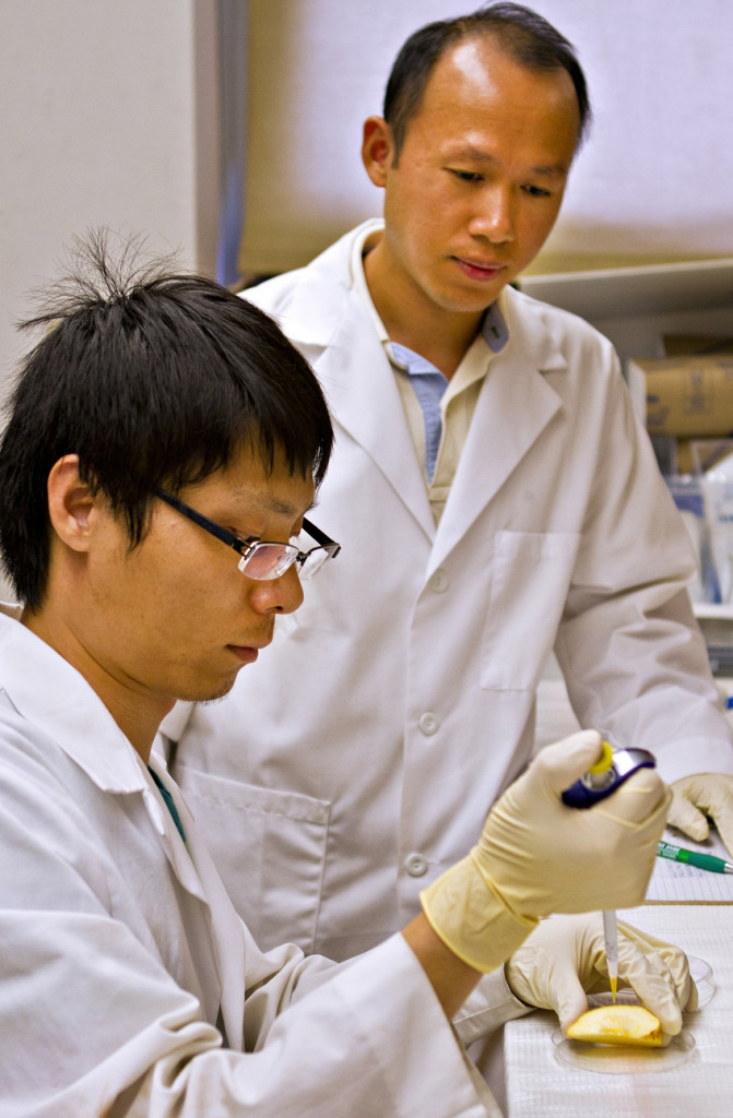 Associate Professor Mengshi Lin watches as graduate student Zhong Zhang applies silver nanoparticles to an apple. Thanks to their study, a reliable method of testing foods for the harmful particles has been found that might be implemented in the future.