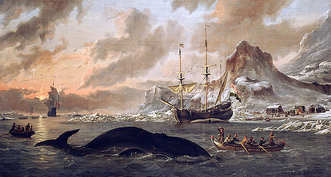 An Abraham Storck (1644 – 1708) painting showing Dutch whalers harpooning a whale off the island of Spitsbergen. The Dutch and British were most active off this island and Greenland, where the MU whale jawbone is thought to have come from. Illustration courtesy Stichting Rijksmuseum het Zuiderzeemuseum, Amsterdam.