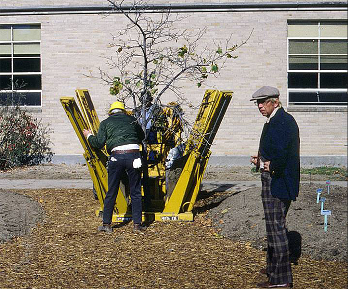 Ron Taven, professor of horticulture in the seventies and eighties, oversees the planting of a tree in what is now the courtyard of the Agriculture Building.  Courtesy William Ruppert.