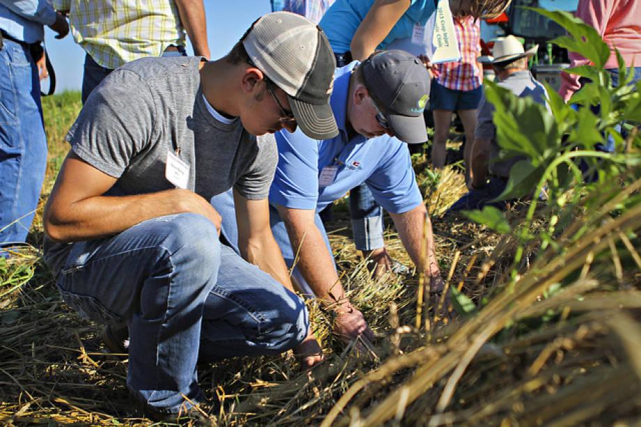 crop injury diagnostics