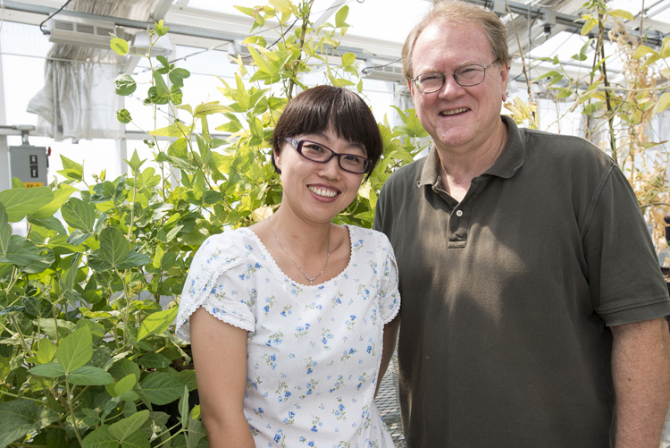 Yan Liang and Gary Stacey research the symbiosis between legumes, like these soybeans, and nitrogen-fixing bacteria at the Bond Life Sciences Center.