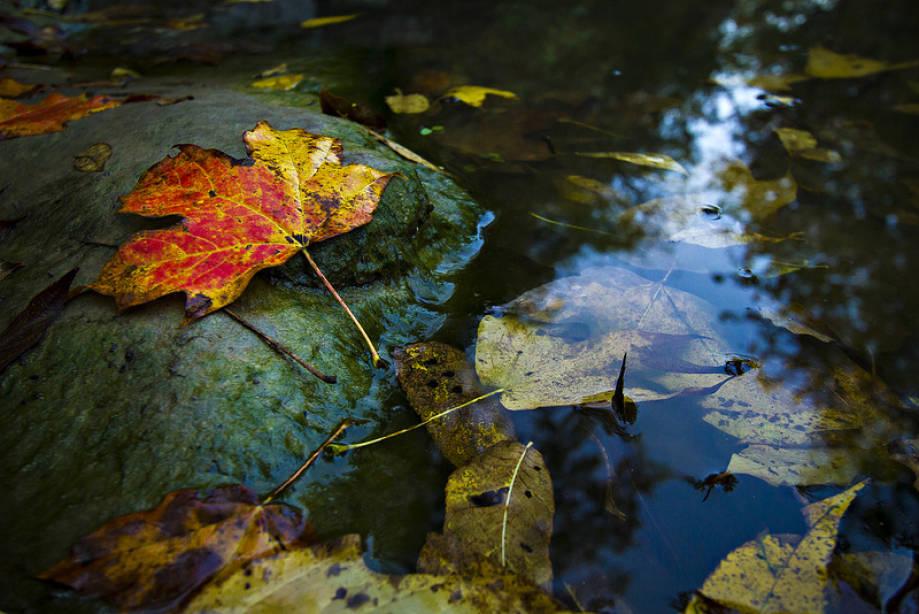 Baskett fall color