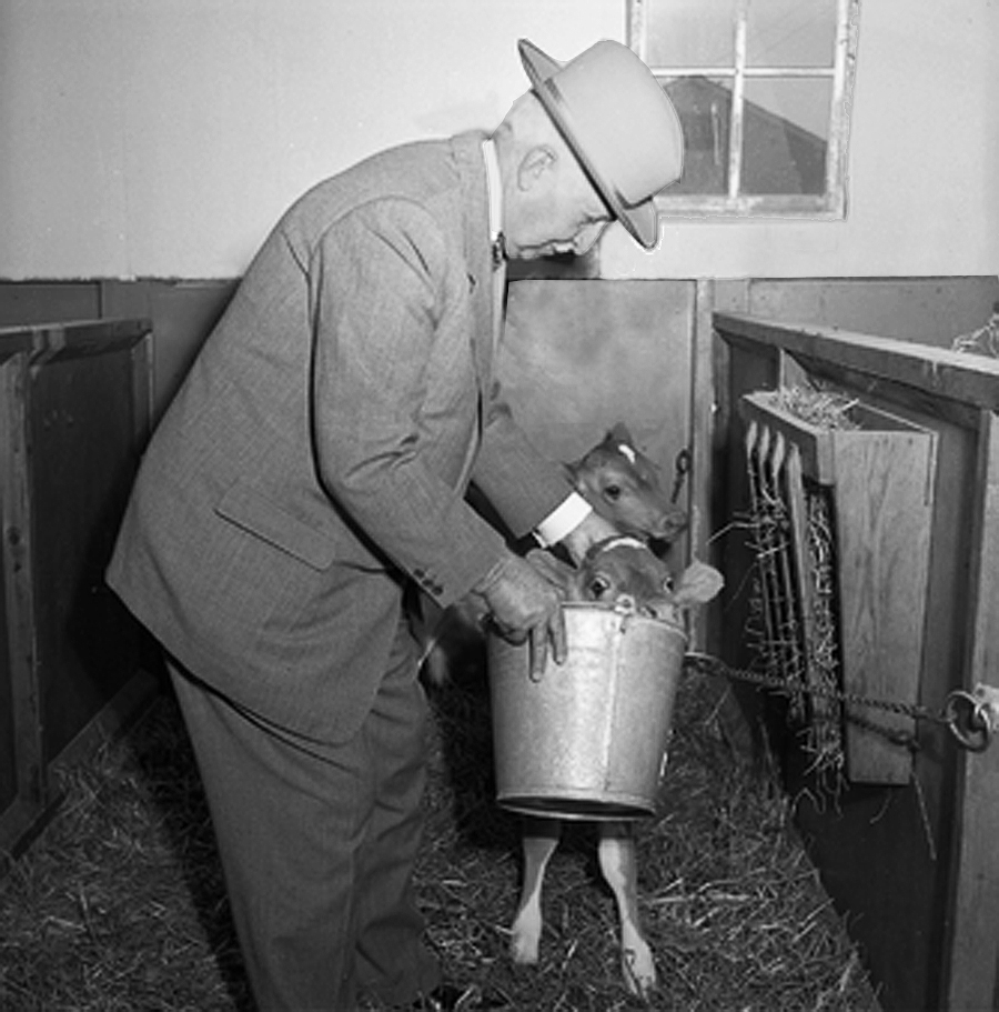 During the ceremonies honoring J.C. Penney for his donation to Mizzou, photographers snapped Penney feeding an MU calf. Courtesy University Archives.