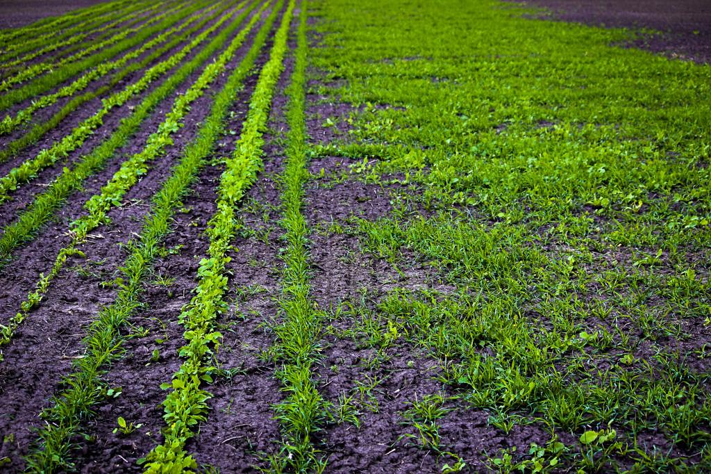 precision ag cover crops_0009