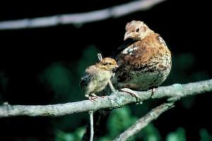 BirdPair