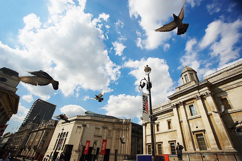 Birds who find a home in London are just as likely to live in Berlin, Jalisco or Phoenix.