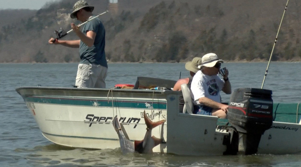 Paddlefish snaggers on Lake of the Ozarks.