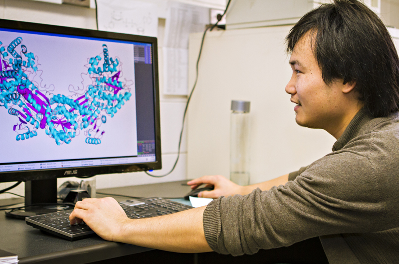 Min Luo, Biochemistry graduate student, reviews a scan from the beamline in the ALS study. Photo by Kyle Spradley.