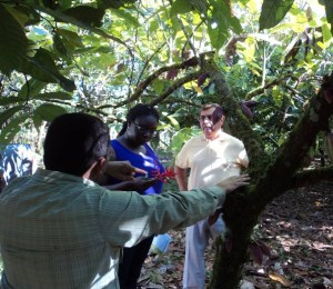 Elizabeth Obeng, Borlaug Fellow, in the field.