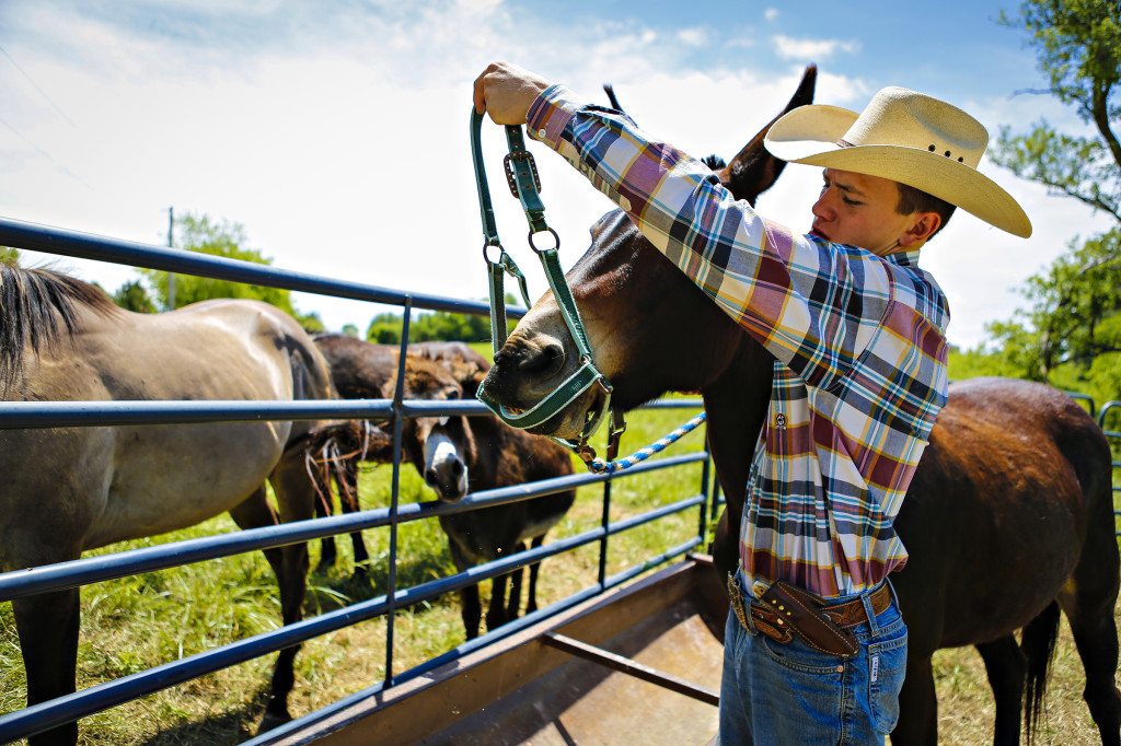 Zane works with Pearl, a mule owned by the Wayne and Micki Frey. The sometimes-stubborn mule needs an occasional attitude adjustment by Zane.