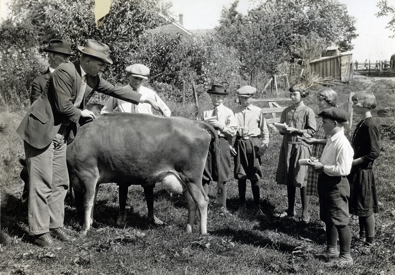 MU animal science faculty give the kids a briefing on how to judge a dairy cow. Courtesy University Archives.