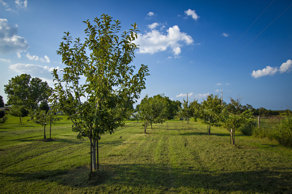 Walking tours of the many tree nut groves will be offered by Horticulturist Andy Thomas.