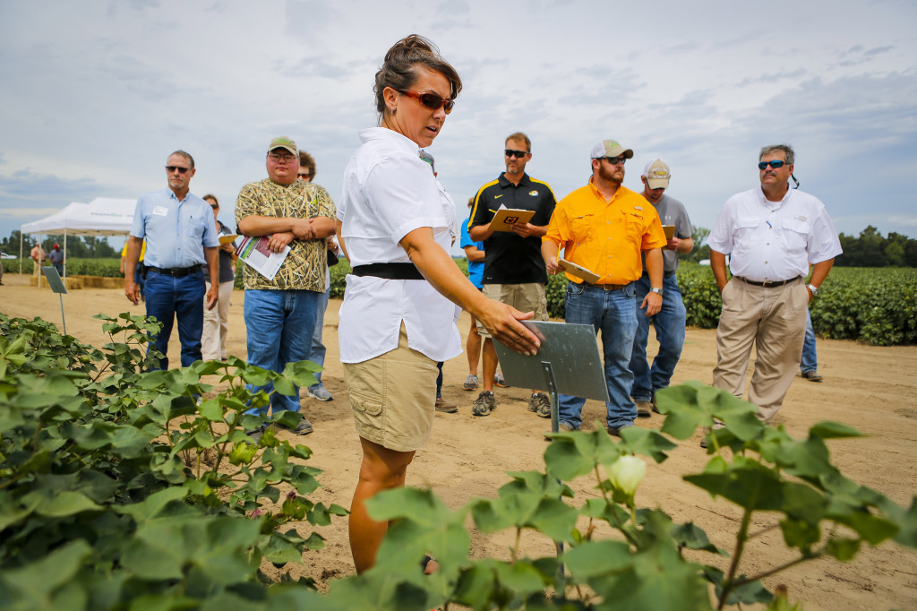 Andrea Jones, cotton specialist at FDRC, gave a tour of the cotton variety trials. Each year, the research center tests hundreds of varieties of cotton at several farms in various soil types to give producers the idea of which varieties perform the best.