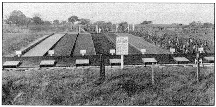 A circa 1915 photo showing the research plots of Frank Dudley and M.E. Miller. Courtesy University Archives.