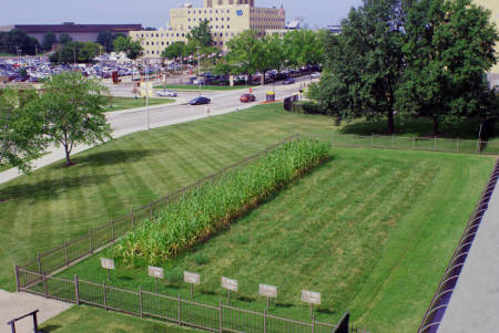 The last quarter acre of MU's Horticulture Farm. It is still in use and will celebrate its 100th birthday this spring.