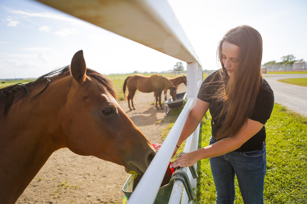 Kelsey Kelly, animal science senior, feeds horses. The MU Equine Teaching Facility at South Farm currently houses a quarter horse breeding program with care and management of these horses being the cornerstone of these courses. Students help out with care of the horses as a learning experience.