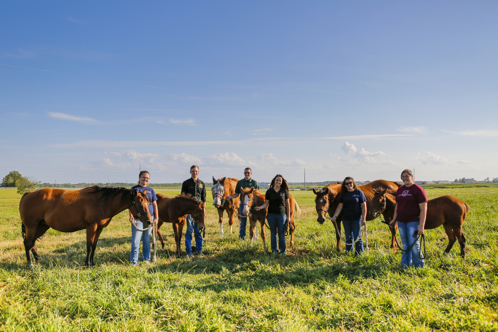 From left, Laura Hawkins and Val, Kenneth Roberts and Gilly, Tyler Stratman and Rosie, Kelsey Kelly and Gatsby, Rebecca Cooper and Wish and Cassie Schmidt and Georgia. The MU Equine Teaching Facility at South Farm currently houses a quarter horse breeding program with care and management of these horses being the cornerstone of these courses. Students help out with cae of the horses as a learning experience.