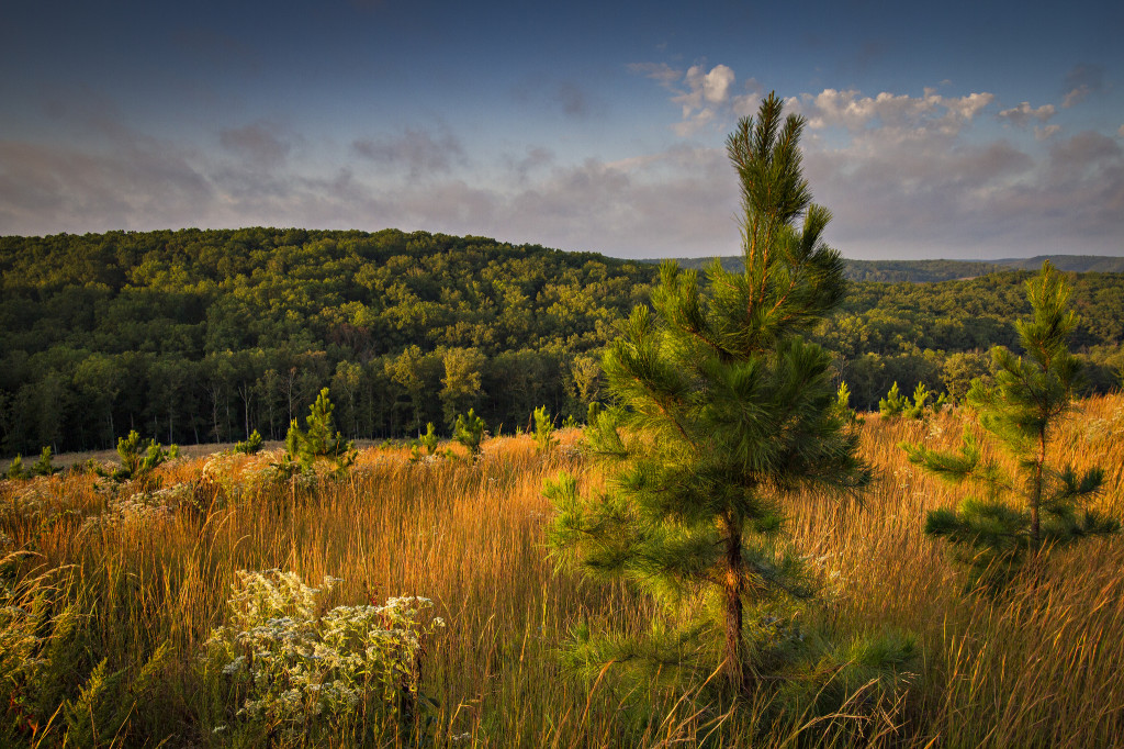 Wurdack's pine restoration savanna could become an area of study for UAS research.