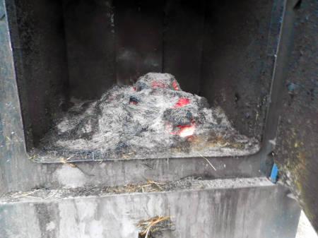 Switchgrass burns to a fine ash.