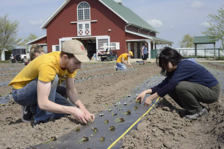 Student volunteers plant onions at Jefferson Farm at the TCA work day, April 15, 2015.