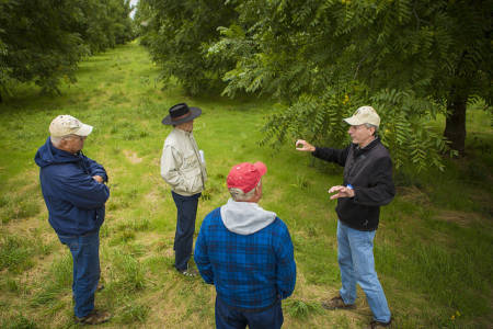Field Days are a great way to get your questions answered with CAFNR experts. Andy Thomas, horticulture specialist, leads a tour through the Southwest Research Center's black walnut orchards at their 2014 Field Day.