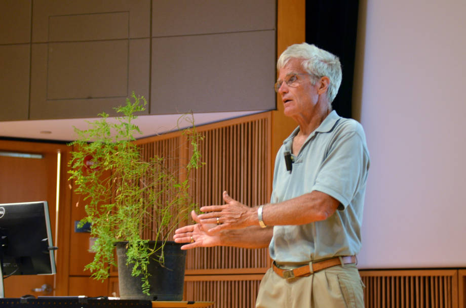 Bill Folk gives a lecture about that the use of traditional medicines for healthcare last July at the Boind Life Sciences Center. A Sutherlandia plant from his own garden is to his left. Photo by Stephen Schmidt.