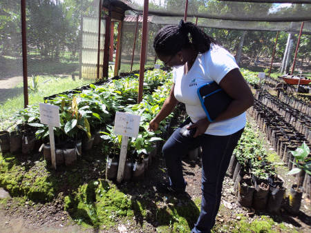 Lizzie Obeng examines cocoa plants at cocoa nursery at the International Cacoa Collection in Costa Rica. Photo courtesy of Lizzie Obeng.