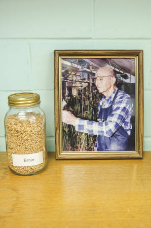 A picture of Ernie Sears, the late renowned wheat researcher who worked at MU for more than 50 years, sits next to a jar of wheat seeds of the Ernie line in Anne McKendry's office.