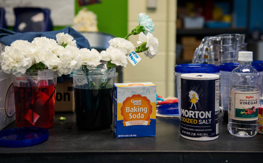 "At a recent session of the ""It's All About Plants"" series at the Benton Elementary Science Club, students learned about how plants transport liquid by conducting tests with a variety of solutions made up of household products, including, from left, baking soda, salt and vinegar."