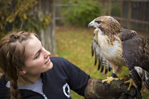Girl handles falcon