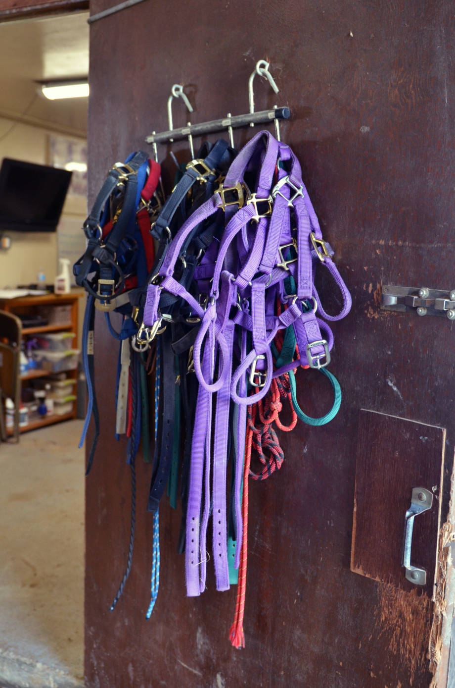 Colorful training bridles hang from a door at the MU Equine Teaching Facility.