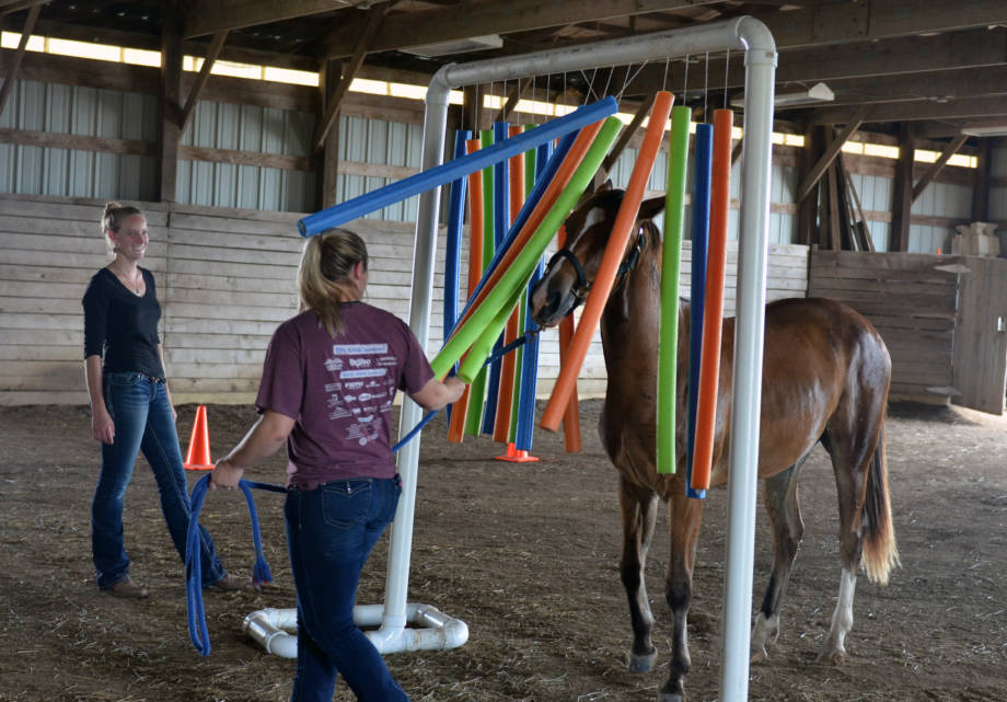 Natalie Duncan instructs a student on how to properly guide her horse through a obstacle during a recent behavior and training class at the MU Horse Farm.