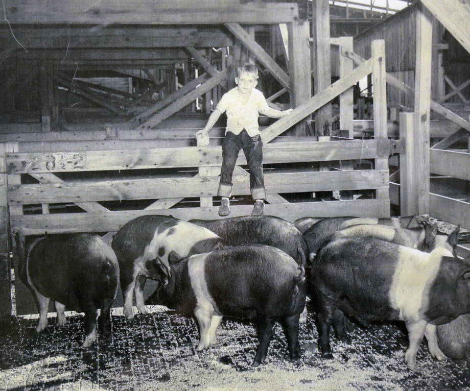 From an early age, John Clay helped out around his family's farm near Lupus. Here he is tending to some hogs.