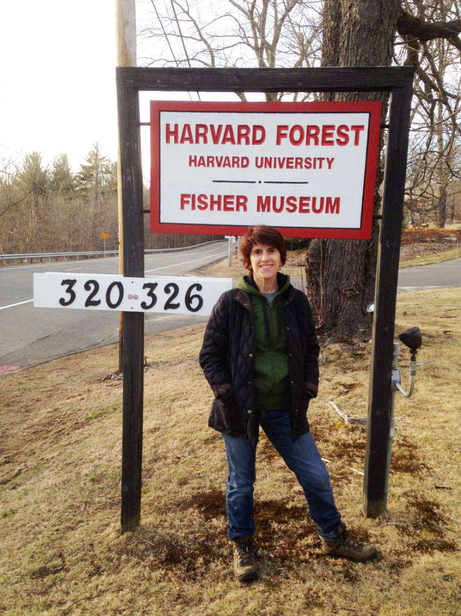 Rose-Marie Muzika spent seventh months as one of a few recipients of the most recent Charles Bullard Fellowship in Forest Research at Harvard University's Harvard Forest. Photo courtesy of Rose-Marie Muzika.