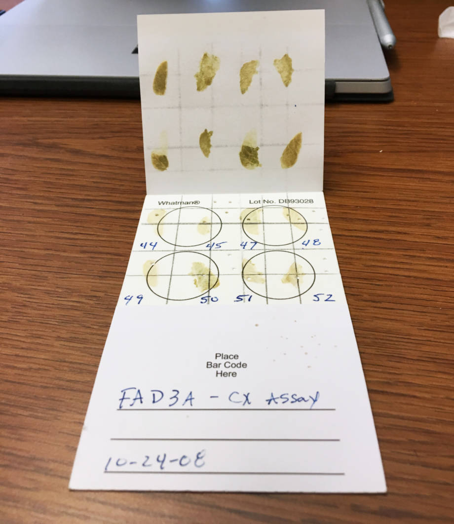 The soybean varieties used in testing on the MU campus, Costa Rica and Ghana were transported using these specialized paper cards.