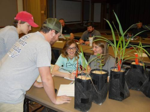 Students see the different stages of crops during the Fisher Delta Research Center Crop Scouting School. Photo courtesy of Andrea Jones.