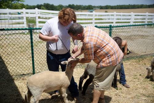 Columbia FFA advisor Kevin Duncan works with students on the proper way to show sheep.