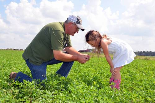 Charles Fletcher shows his granddaughter one of the tricks of the trade of successful dairy farming -- good forage.