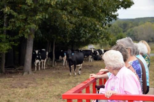 Farm tours at Edgewood Dairy educate the public about where their food comes from. Dairy Month provides the Fletcher family an opportunity to showcase the dairy and creamery.