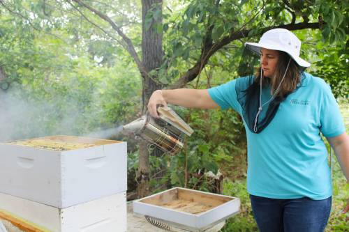 MU Extension specialist Joni Harper smokes bee hives. She works with those attending beekeeping workshops to establish hives.