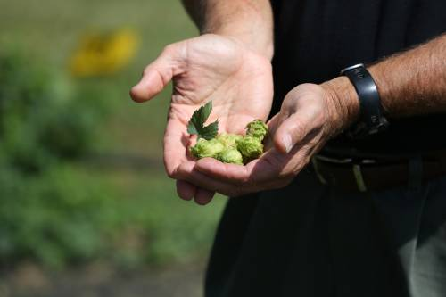 Bradford has been home to three field day, all with a focus on the hops research taking place at the Center.