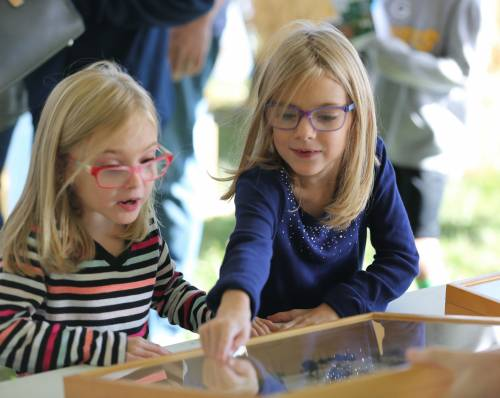 Insects were a big draw for kids during the South Farm Showcase. There was even an opportunity to eat mealworms.