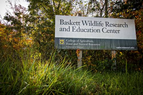 The Baskett Research Center also contains 24 vegetation plots so that Wood can get a smaller scale understanding of the forest.