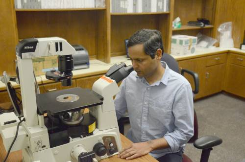 Behura and his colleagues have most recently been studying tRNA fragments, small sections of transfer RNA molecules, which play active roles in the biology of diverse organisms. The team has found that these tRNA fragments (tRFs) have important functions in Aedes aegypti mosquitos as well.