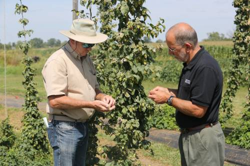 Patrick Byers (right) and Jim Quinn, both University of Missouri Extension horticulturists, planted hops for the first time in their respective careers in 2017. The hop yard is located at the Bradford Research Center and includes 10 varieties.